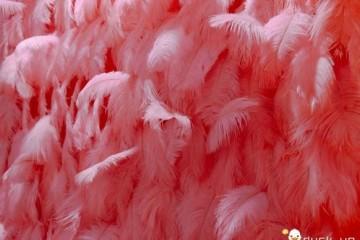 厦门最荫蔽的一家酒吧粉红茸毛通道双胞胎调酒师浪漫且复古