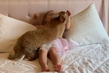 给女儿买了只兔子几个月后的体型让人吃不消这是喂激素长大的吗